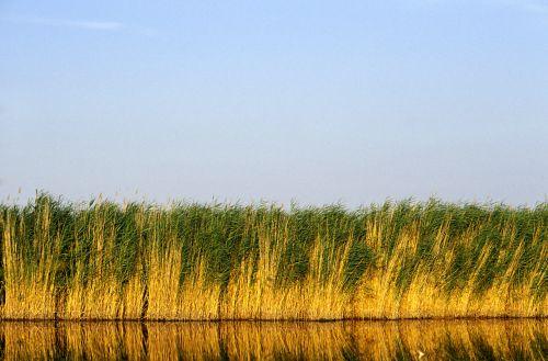UNESCO-Beirat will Aus für Großprojekt am Neusiedler See